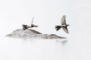 Fliegende_Vögel_1-klein.jpg